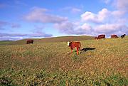 Ranch, Kohala, Island of Hawaii<br />