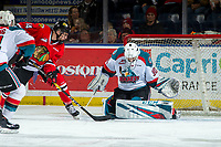 KELOWNA, CANADA - MARCH 2: Jake Gricius #14 of the Portland Winterhawks puts the puck into the net of Roman Basran #30 of the Kelowna Rockets during first period  on March 2, 2019 at Prospera Place in Kelowna, British Columbia, Canada.  (Photo by Marissa Baecker/Shoot the Breeze)