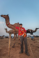 A young camel trader with his camels at the Pushkar Camel Fair, Rajasthan, India