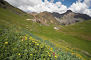 Governor Basin, Mountain Top Mine, wildflowers, San Juan Mountains