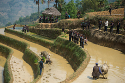 April 26, 2017- Residents attend a rice transplanting ceremony in the terrace field in Shanpu village of Azhahe township in Honghe, southwest China's Yunnan Province, April 26, 2017. The ceremony was held to greet a new transplanting season.  (Credit Image: © Hu Chao/Xinhua via ZUMA Wire)