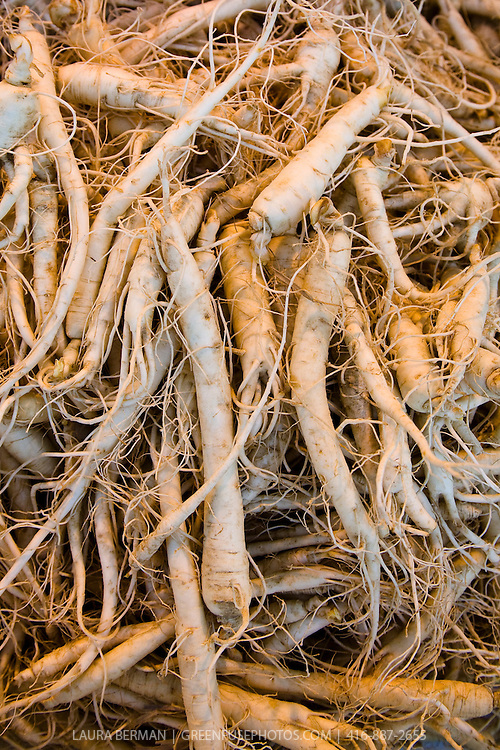 Dried Ginseng root (Panax), grown in Ontario Canada, used as a rejevenator in Traditional Chinese medicine.