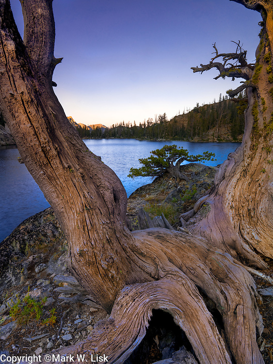 Old growth and new growth grips the rocky shoreline of the Alpine Creek Lakes in the Sawtooth Wildernee, Idaho.