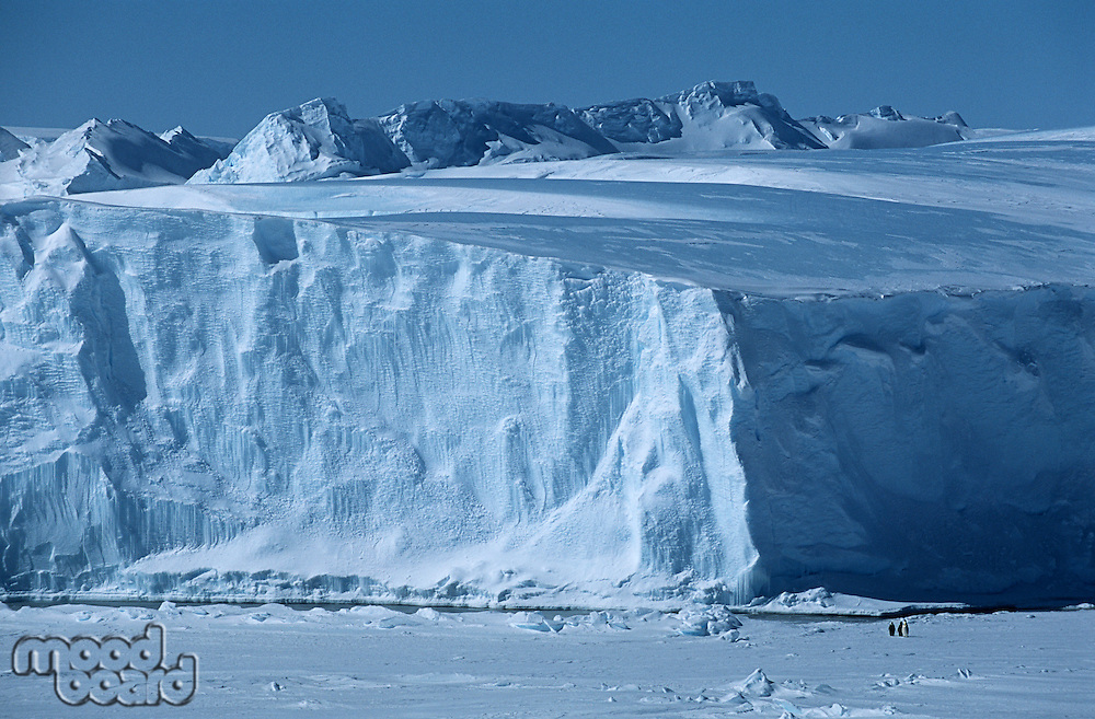 Antarctica Weddell Sea Riiser Larsen Ice Shelf Iceberg with Emperor Penguins