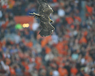 A golden eagle flies before the Ole Miss vs. Auburn at Jordan-Hare Stadium in Auburn, Ala. on Saturday, October 29, 2011. .