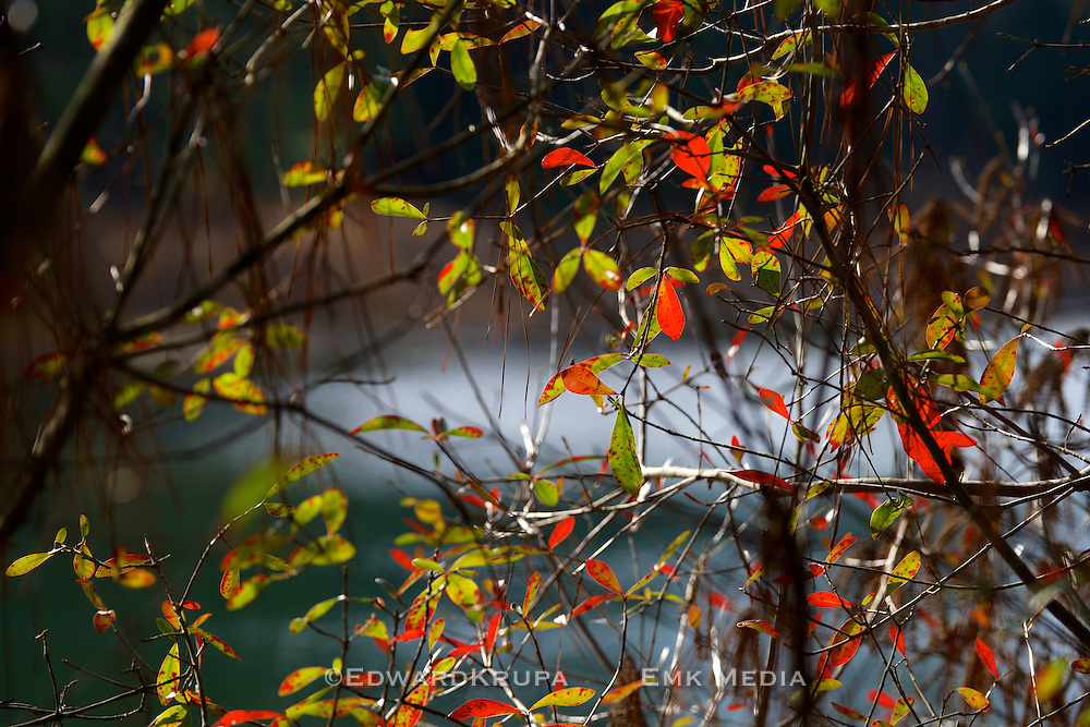 Changing leaves.