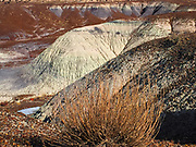 Rugged landscape of the Petrified Forest.