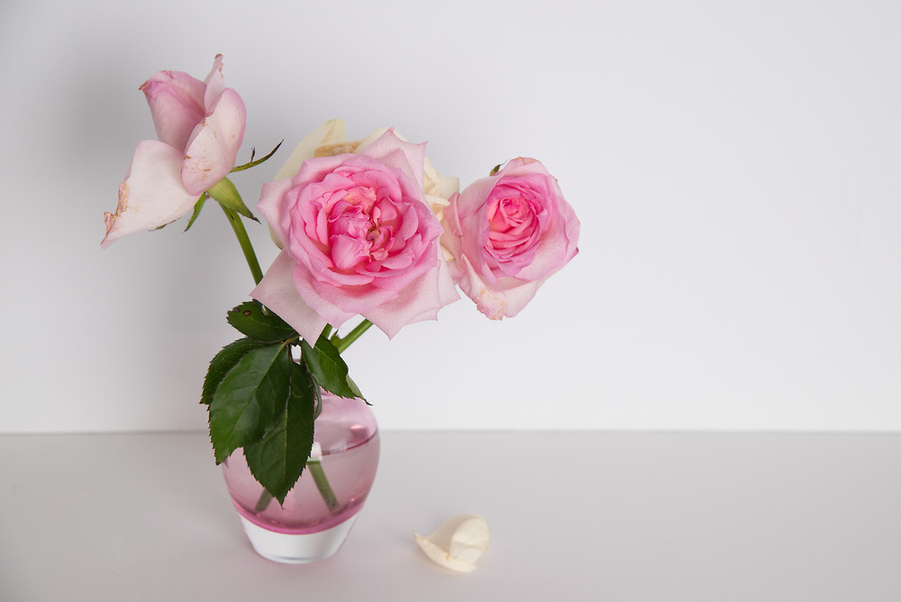 Still Life flowers photo print, pink roses, pink vase, Santa Monica wall art photography limited edition matted print, fine art.