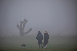 © Licensed to London News Pictures. 22/01/2020. London, UK. Dense fog for dog walkers in Richmond Park this morning. Another foggy start for commuters this morning in Richmond as forecasters predict lingering fog and milder weather for the week ahead. Photo credit: Alex Lentati/LNP