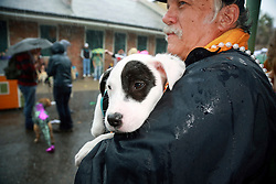 "23 Feb 2014. New Orleans, Louisiana.<br /> Dogs and their owners walk the wet and soggy streets of the French Quarter at the 22nd Mystic Krewe of Barkus parade, the only officially licensed Mardi Gras krewe by and for canines. This year's parade is themed  ""Dogzilla: Barkus Licks the Crescent City."" <br /> Photo; Charlie Varley/varleypix.com"