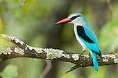Mozambique Birding