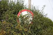 Red circular road sign obscured by vegetation, Suffolk, England, UK