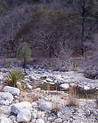 McKittrick Canyon, Stream, Creek, Canyon, Guadalupe Mountains, Guadalupe Mountains National Park, Texas
