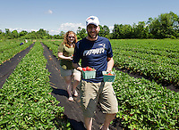 Nathan Isabelle and Phillisha Veilleux pick their own strawberries at Beans & Greens Farm Stand in Gilford on Friday morning.  (Karen Bobotas/for the Laconia Daily Sun)