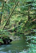 Redwood Forest, redwoods, Stream, Big Sur, California