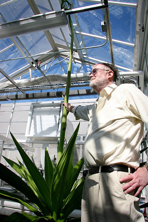 Professor of Biology David Campbell stands proudly next to his burgeoning agave plant in the upstairs greenhouse of the Noyce Science Center on Tuesday.