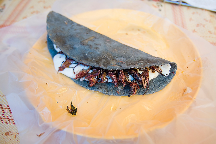 A blue corn empanada filled with chapulines, grasshoppers fried with salt and lime juice, is served on a plate at a market food stall in Tepoztlan, Morelos, Mexico on June 14, 2008.