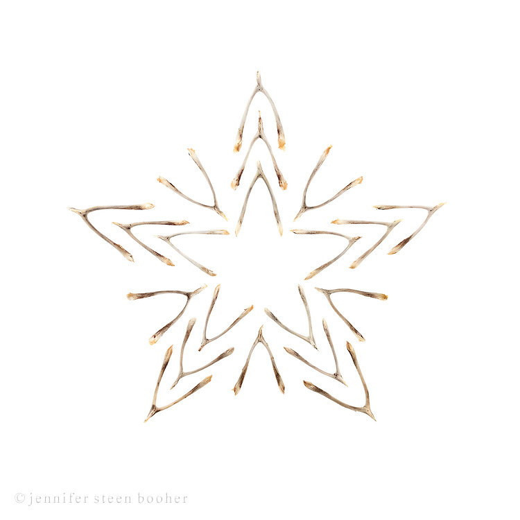 Wishbone star (Lucky star 1)