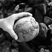 A man holds a fresh coconut on the North Shore of the island Oahu in Hawaii.