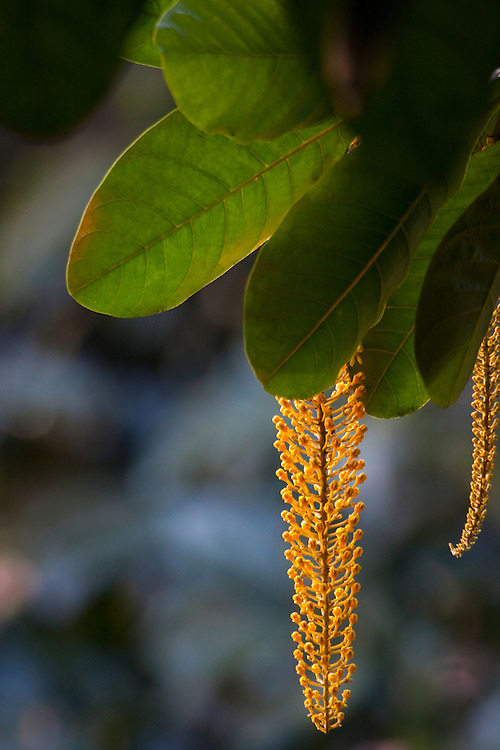 Parauapebas_PA, Brasil...Detalhe na de uma planta na Floresta Nacional de Carajas, Para...Detail of a plant at Carajas National Forest, Para...Foto: JOAO MARCOS ROSA / NITRO