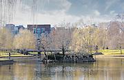The Lagoon at the Boston Public Garden