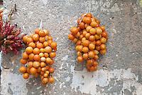"""Leverano (LE) - Tipiche """"pendule"""" di pomodori pugliesi che in questo modo vengono conservati per l'inverno."""