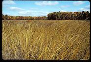 06: HERITAGE IROQUOIS PARK GRASSLANDS, HUNTER