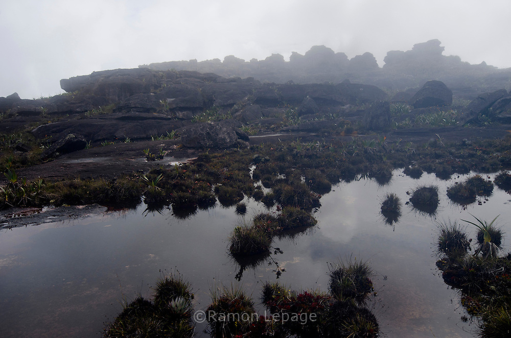 La Gran Sabana, Venezuela, 14-04-2011.Cima del Roraima tepuy en La Gran Sabana.  Localizada al sur de Venezuela en el macizo Guayanés en la parte sureste del Estado Bolívar hasta la frontera con Brasil. En ella conviven diversos grupos indígenas, entre ellos la etnia Pemón. La Gran Sabana forma parte de uno de los Parques Nacionales más extensos de Venezuela, el Parque Nacional Canaima. La Gran Sabana, 14 Abril  de 2011. .(Ramon Lepage / Orinoquiaphoto/ LatinContent/Getty Images)..Trail to Kukenam and Roraima tepui. Tepuis are large mesas that rise out of dense jungle in southeast Venezuela and adjacent Brazil and Guyana. Over 100 of these plateaus rise above the verdant landscape of this region, which is known in Venezuela as the Gran Sabana and also the Guyana Highlands. Tepuis are comprised of Precambrian sandstone, and are some of the oldest exposed rock formations in the world. Monte Roraima is one of the best known of the tepuis and has a labyrinth of rock forms and endemic plants on its summit..