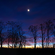 A crescent moon sets as the sun begins to rise on the horizon  over a copse of trees at Big Meadows in Shenandoah National Park.