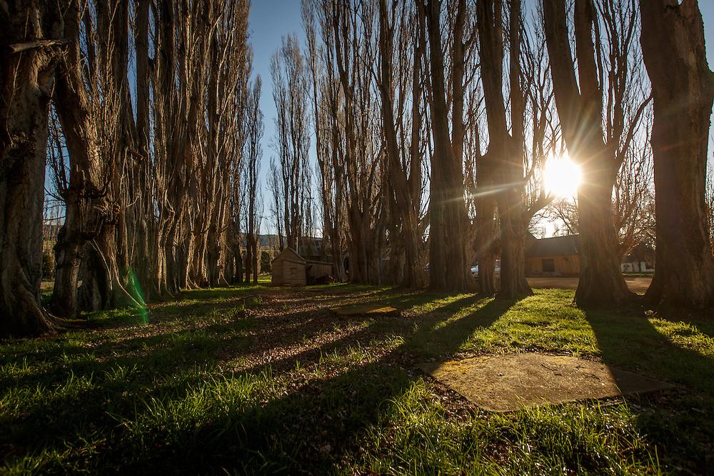 Redlands Estate Distillery in Plenty, Tasmania, August 25, 2015. Gary He/DRAMBOX MEDIA LIBRARY