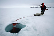 Sasa Samson, 37, the best hunter in his community, pulls a seal from its breathing hole after shooting it with his rifle in Resolute Bay, Canada on Tuesday June 12, 2007. Sasa hunts seals for food, and his community uses every part of the seals, either eating the meat or using the hides to make warm clothes. The traditional way of life in the Resolute Bay Inuit community is being threatened by rising temperatures. The dangers of global warming, which have been extensively documented by scientists, are appearing first, with rapid, drastic effects, in the Arctic regions where Inuit people make their home. Inuit communities, such as those living on Resolute Bay, have witnessed a wide variety of changes in their environment. The ice is melting sooner, depleting the seal population and leaving them unable to hunt the animals for as long. Other changes include seeing species of birds and insects (such as cockroaches and mosquitoes) which they have never encountered before. The Inuit actually lack words in their local languages to describe the creatures they have begun to see. ....