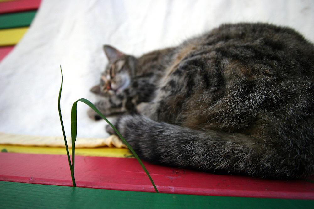 Stra&szlig;en- und Hauskatze Speedy auf einer Rastafari Bank im Garten.<br /> <br /> Street- and housecat Speedy on a rastafari bench in the garden.