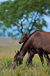 Uma égua e seu potro. FOTO: Eduardo Rocha/Preview.com