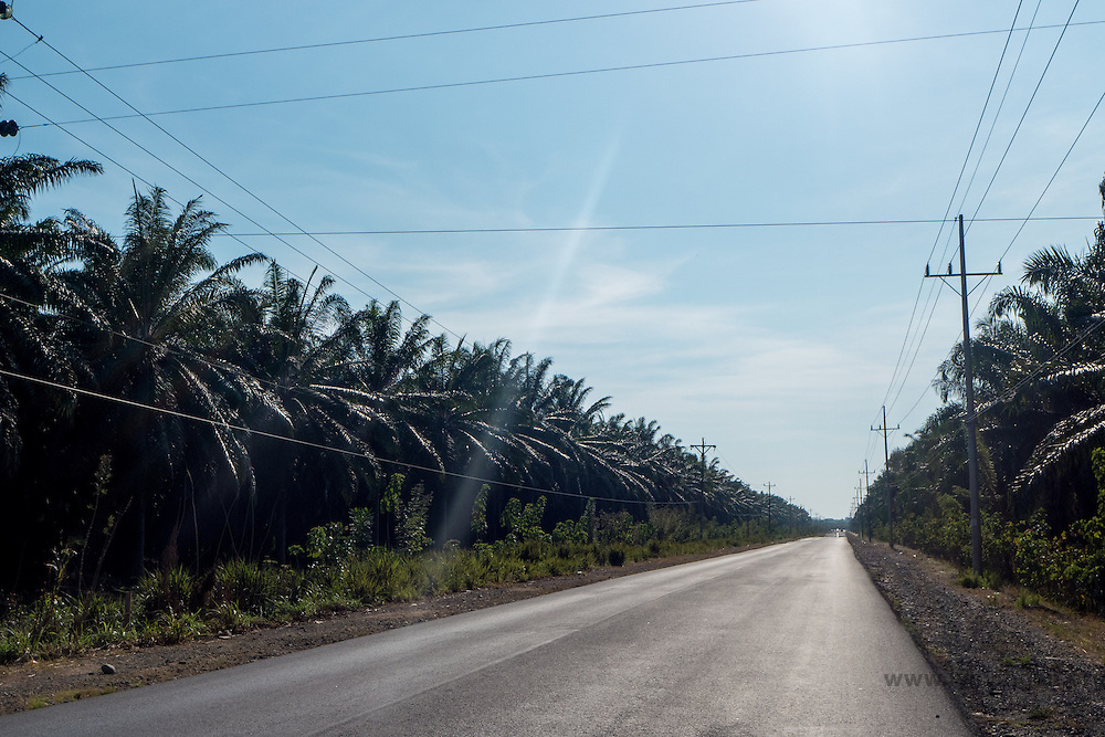 Palm oil plantation, Cost Rica