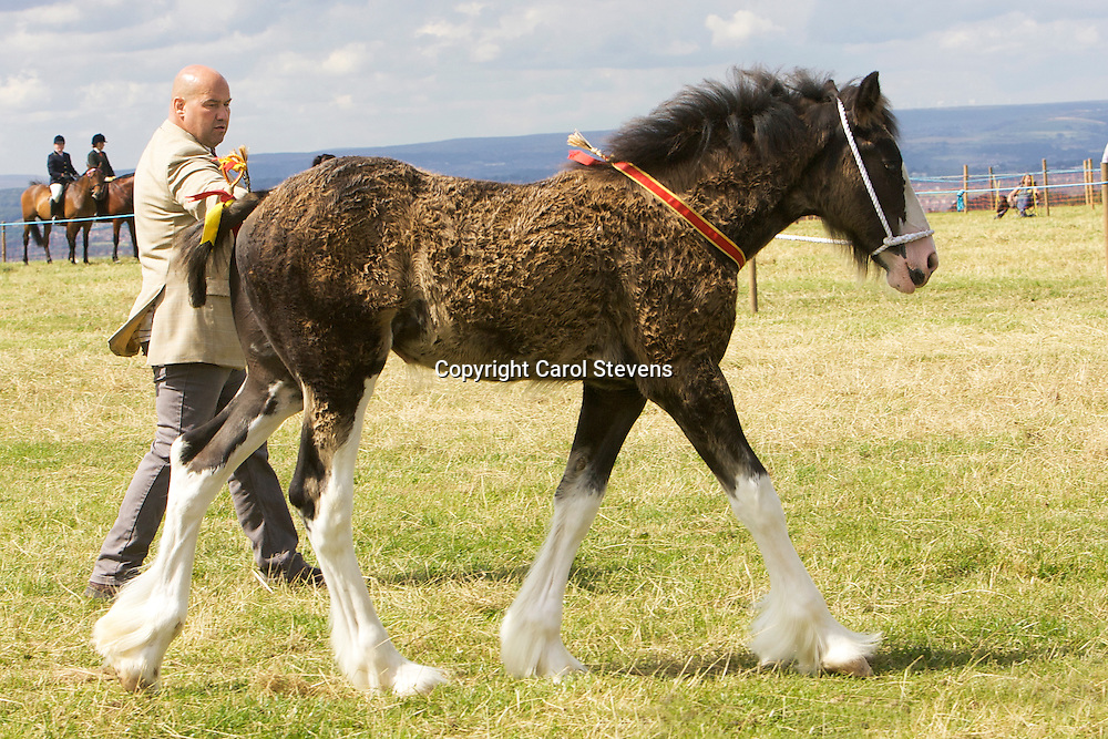 Emley Show 2012  <br />