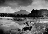 A volcano inside a volcano: Active volcano Mt. Batur rises from a much larger crater inhabited by Balinese fishermen and farmers who raise cabbage, carrots and tomatoes in the temperate climate on the roof of Bali.  Lake Batur, Bali, Indonesia.