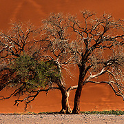 Sossussvlei is located in the Namib Desert in southern Namibia and forms part of the Namib-Naukluft National Park. The desert is Africa's second largest and contains some of the largest dunes in the world (over 300 meters). The area is considered to be one of the oldest deserts in the world, has less than 10 mm (0.4 inches) of rain annually and is almost completely barren.