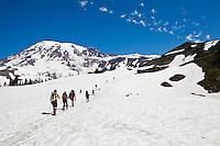 A line of climbers and hikers heading up Mt Rainier, Washington, USA.
