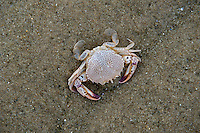 Crab on beach, Cape Cod, MA