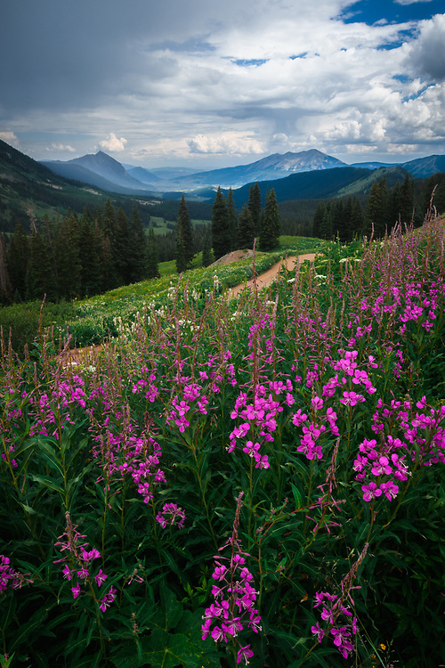 A shot taken near Crested Butte near the 403 trail.<br /> <br /> Make:NIKON CORPORATION<br /> Camera Model Name:NIKON D850<br /> X Resolution:600<br /> Y Resolution:600<br /> Resolution Unit:inches<br /> Software:Adobe Photoshop Lightroom Classic 7.4 (Windows)<br /> Modify Date:2018-07-23 22:08:50 GMT<br /> Exposure Time:1/80<br /> F Number:25<br /> Exposure Program:Aperture-priority AE<br /> ISO:400<br /> Sensitivity Type:Recommended Exposure Index<br /> Recommended Exposure Index:400<br /> Exif Version:0230<br /> Date/Time Original:2018-07-12 15:56:36 GMT<br /> Create Date:2018-07-12 15:56:36 GMT<br /> Shutter Speed Value:1/80<br /> Aperture Value:25<br /> Exposure Compensation:-1/3<br /> Max Aperture Value:4<br /> Metering Mode:Center-weighted average<br /> Light Source:Unknown<br /> Flash:No Flash<br /> Focal Length:24.0 mm