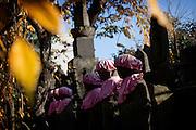 Tokyo, November 2009. Jizo statues in a temple of Takada neirborhood.