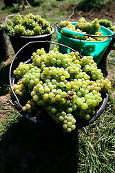 CZECH REPUBLIC MORAVIA JECMENISTE 10SEP05 - Baskets filled with freshly picked grapes from a wine growers' cooperative in Jecmeniste stand ready for collection during the seasonal wine harvest. Southern Moravia's centuries-old traditions in wine growing make it a well-established wine region...jre/Photo by Jiri Rezac..© Jiri Rezac 2005..Contact: +44 (0) 7050 110 417.Mobile:  +44 (0) 7801 337 683.Office:  +44 (0) 20 8968 9635..Email:   jiri@jirirezac.com.Web:     www.jirirezac.com..© All images Jiri Rezac 2005 - All rights reserved.