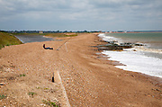 Man sea fishing from the shingle beach at East Lane, Bawdsey, Suffolk, England, UK