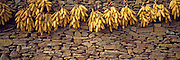SPAIN, EASTERN AREAS, ARAGON Isolated Farm in rugged Sierra del Maestrazgo; detail drying corn, east of Teruel