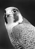 Disabled Birds of Prey Portraits