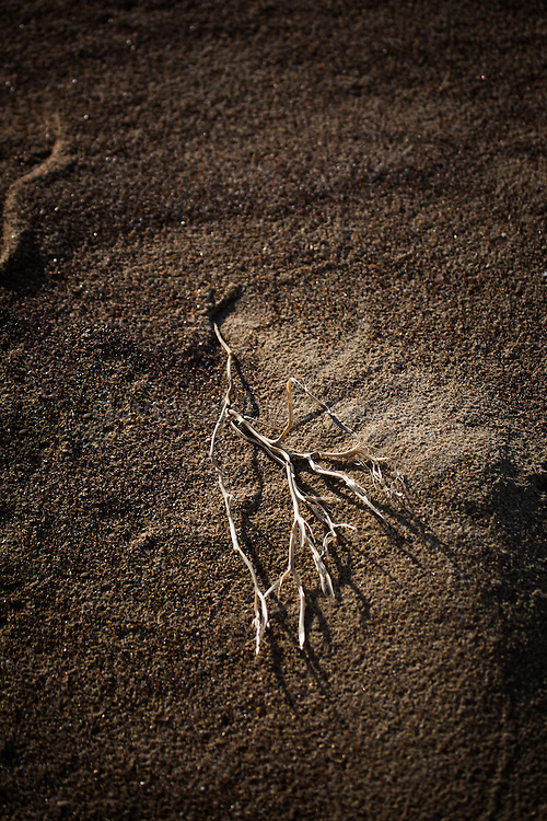 A dry twig lies on the sandy beach at Knokke, Flanders, Belgium