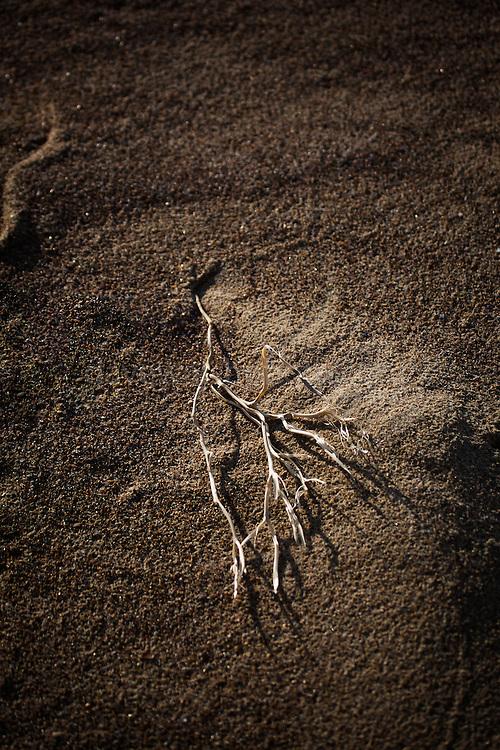 A dry twig lies on the sandy beach at Knokke, Flanders, Belgium