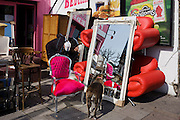 Shop owner's pet dog and bright furniture on sale in a London street.