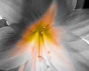 Still Life: Flower