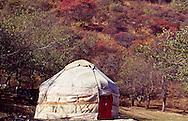 A Kazakh yurt in an apple orchard in southeastern Kazakhstan.